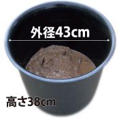植え付け済みプラ鉢10号(黒)