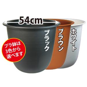 ハス(蓮)用・大型プラ鉢・12号 ブラック
