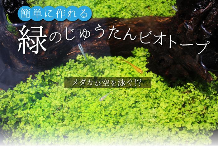 杜若園芸 とじゃくえんげい 緑のじゅうたん、水草の草原ビオトープ