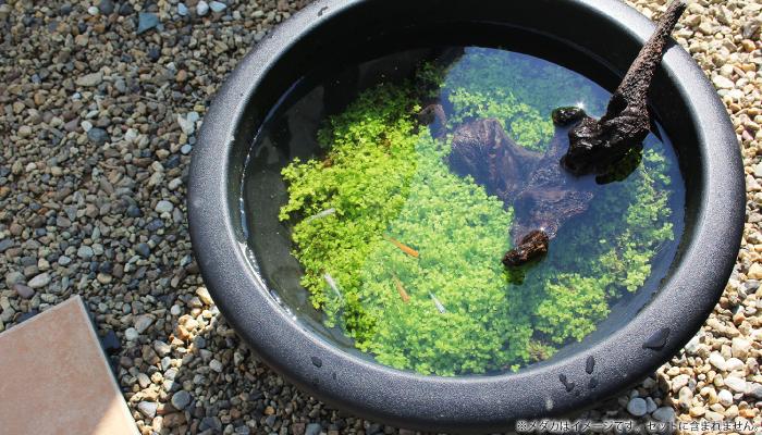 プラ製鉢で作る緑のじゅうたん