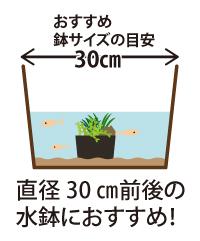 寄せ植えのサイズの目安