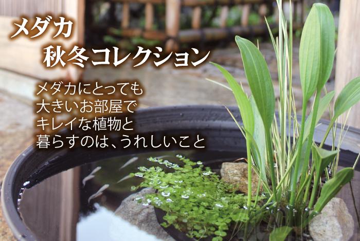 秋冬コレクション 丸カゴ