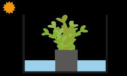 水草カット苗手順⓪ 杜若園芸 水草水槽 水草 アクアリウム