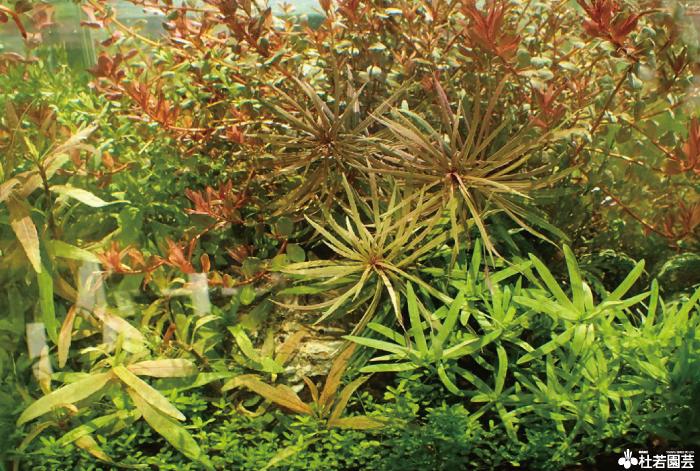 トップイメージ 杜若園芸 水草水槽 水草 アクアリウム