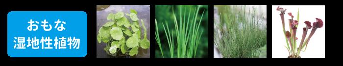 杜若園芸 水草アクアリウムの材料