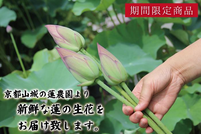 京都山城の里より蓮の花ををお届けいたします。