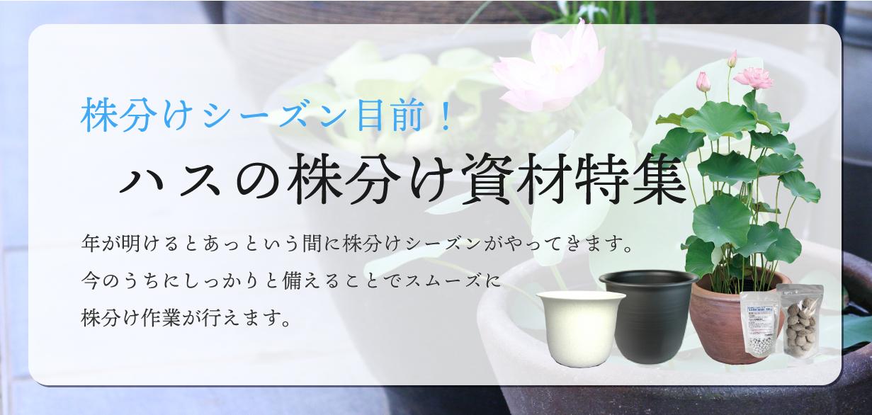株分け資材キービジュアル