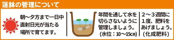 蓮鉢の管理法