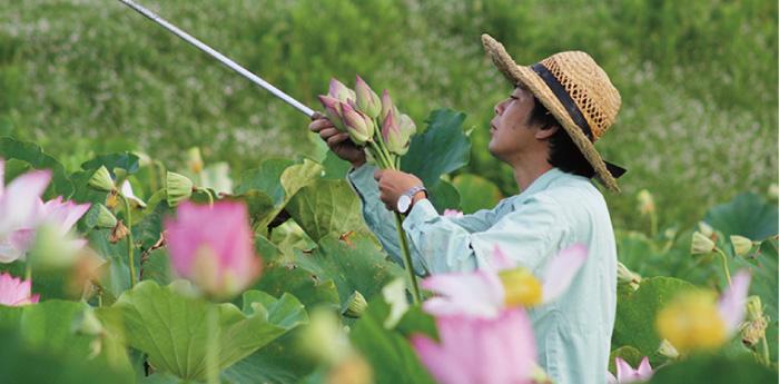 無農薬で大切に水と大地、そして蓮を美しく自然と調和するように大切に育てています。
