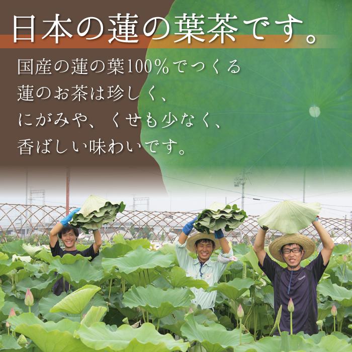 人気の【蓮茶】 京のはす美茶 (国産 無農薬)