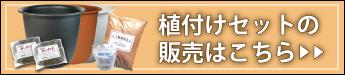杜若園芸 とじゃくえんげい 蓮の植付けセットの販売はこちら