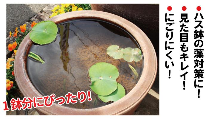 蓮鉢の藻対策、にごり防止に!