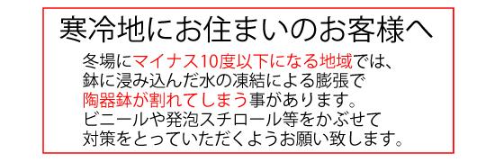 hardakadama_size_m.jpg