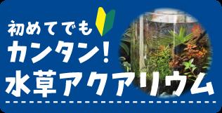 初めてでも簡単!水草アクアリウム 水生植物、水草、ビオトープ、メダカ、ハス