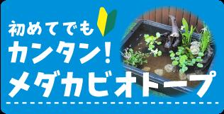 初めてでもカンタン!メダカビオトープ 水生植物、水草、ビオトープ、メダカ