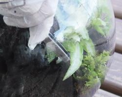 杜若園芸 シダリウム・テラリウムの作り方