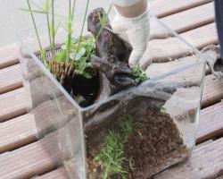 杜若園芸 水草テラリウム・アクアテラリウムの作り方