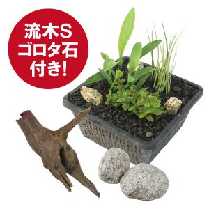メダカ衣替え角カゴデラックスA