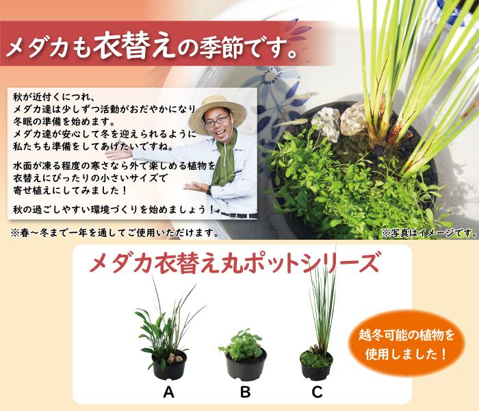 メダカ衣替え丸ポットシリーズ ファーストビュー