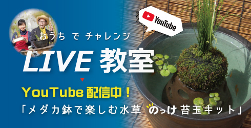 【ライブ寄せ植え教室】メダカ鉢で楽しむ水草のっけ苔玉キット