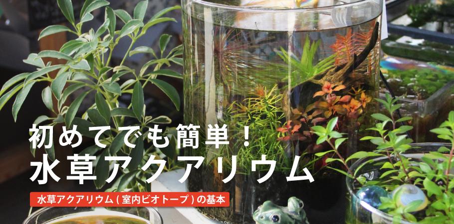 main-image_aquarium.png