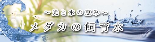 medakashiikusui.jpg