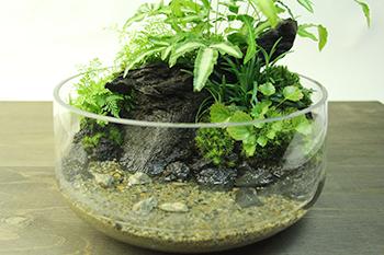 杜若園芸 水草テラリウム、アクアテラリウム