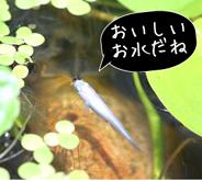 oishiiomizu.jpg