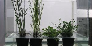 水生植物の育て方