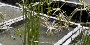屋外で越冬可能な植物
