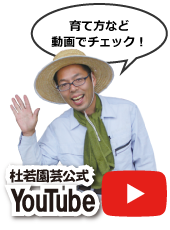youtube追従アイコン