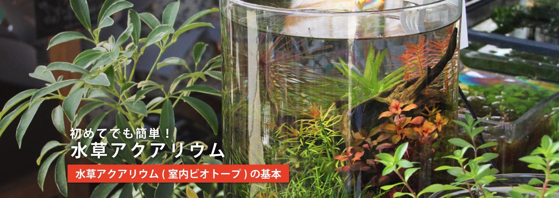 水草アクアリウム