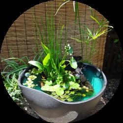 ビオトープ・水草