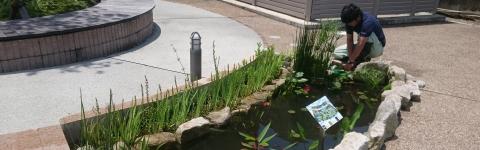 池・ビオトープ施工/メンテナンス