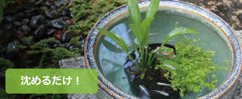 メダカのための水草寄せ植え