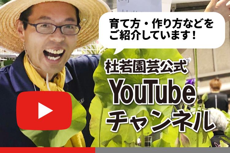 youtube一覧へ