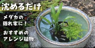 メダカ鉢に沈めるだけ!メダカの隠れ家におすすめの水草 水生植物、水草、ビオトープ、メダカ、ハス