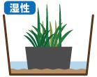 湿性植物の管理水位
