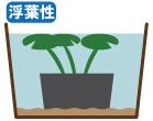 浮葉性植物の管理水位
