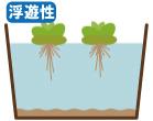 浮遊性植物の管理水位