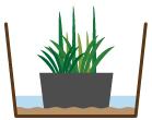 湿地性植物 水位