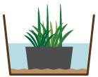 抽水性植物 水位