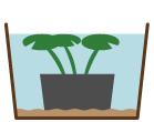 浮葉性植物 水位
