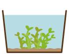 沈水性植物 水位