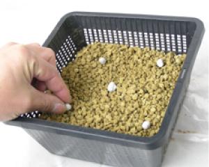 ①植木鉢か、植付け容器「植物カゴ」に赤玉土  を3分の1ほど入れ、肥料も入れます。