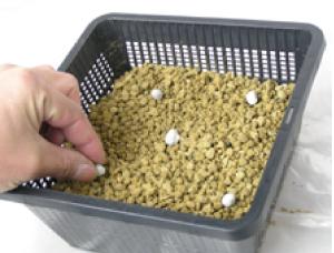 ①底穴が開いている植木鉢か、植付け容器「植  物カゴ」に赤玉土を3分の1ほど入れ、肥料も入れます。
