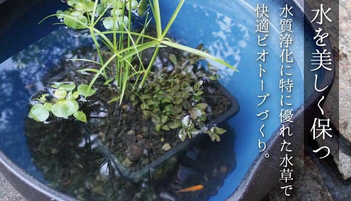 メダカビオトープにおすすめ!水質浄化アレンジ角カゴ