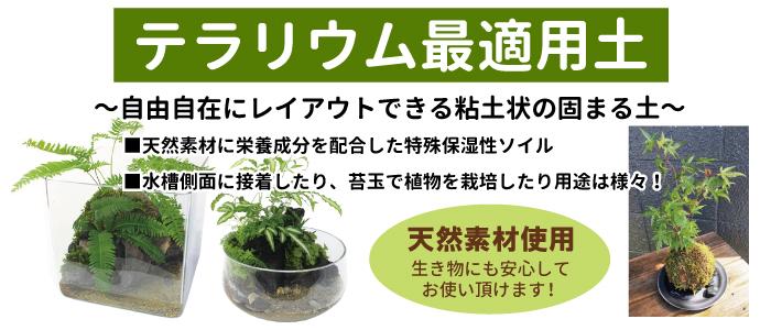 苔、こけ、コケ テラリウム最適用土
