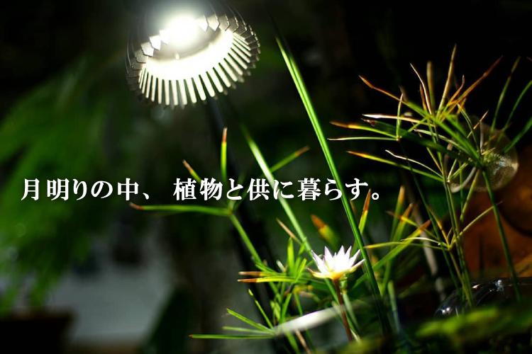 TSUKUYOMI アイキャッチ画像