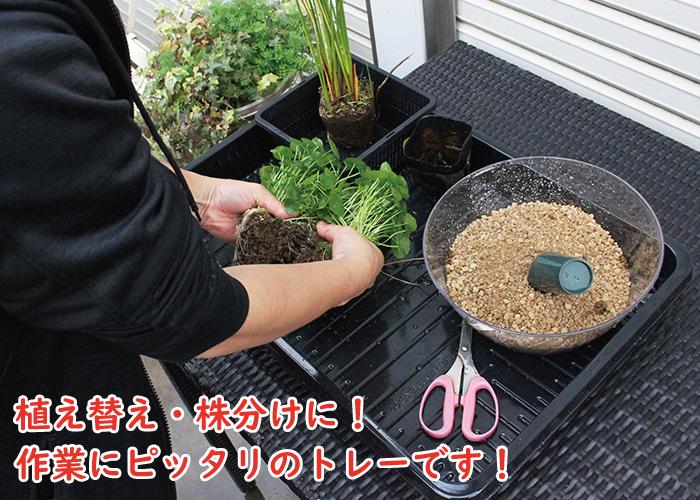 植物植え替えトレー